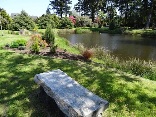 north side of pond