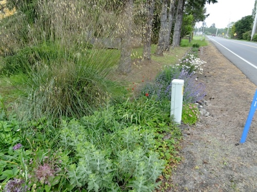 the roadside garden at Diane's, with Stipa gigantea