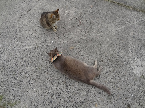 while Mary and Smokey lounged on Nora's garage carpark.