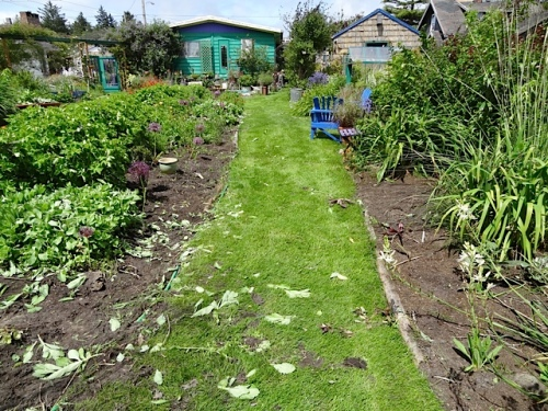 the garden left in chaotic condition....