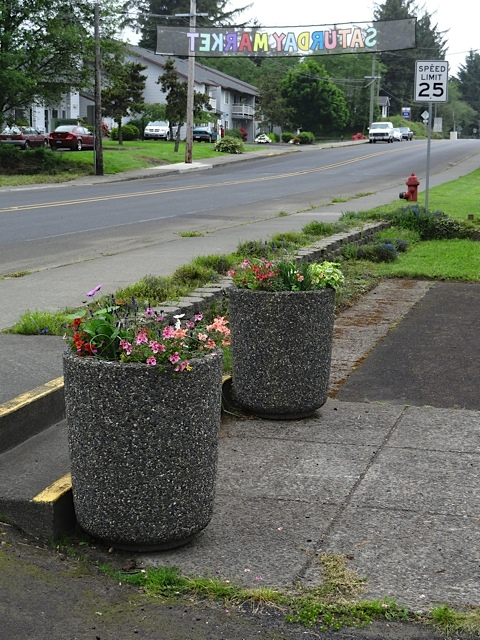 added some Cosmos 'Sonata' to the city hall planters, because the staff gives them supplemental water