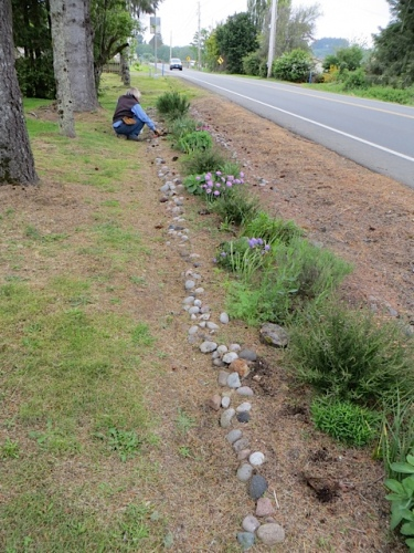 Meanwhile, Allan planted cosmos in the roadside strip...