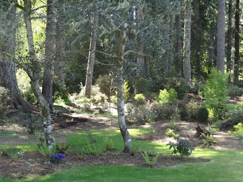 the cryptomeria grove