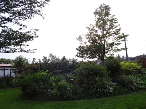 dusk in the garden...the weeds don't show...