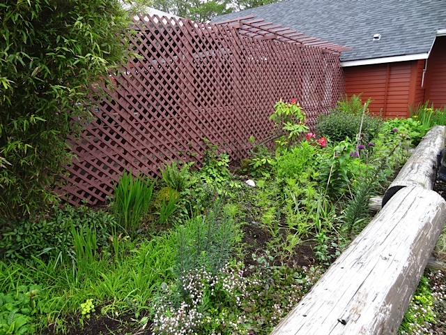 a check up on the Depot garden