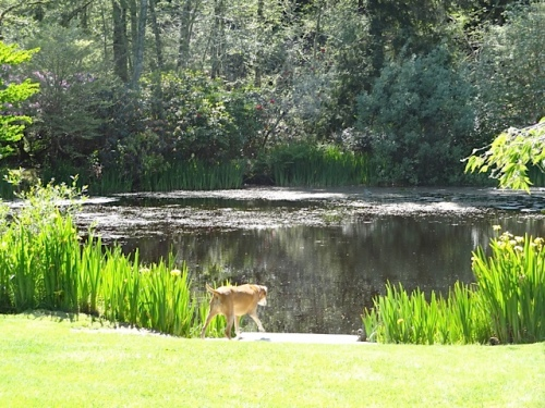 What a doggie paradise.  Bertie would have been swimming daily.