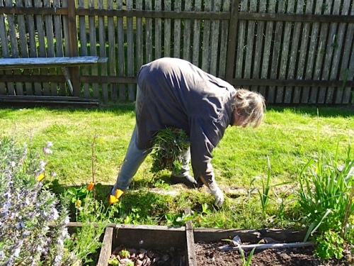 Allan's photo: I far prefer weeding to planting.
