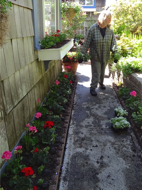 Allan's photo: me sorting plants for the windowboxes