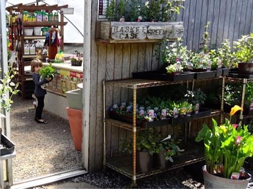 Allan's photo of a young gardener