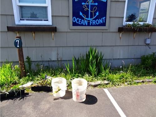 Allan's photo: one windowbox emptied