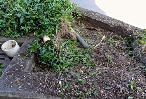Allan's photo: horribly dry and rooty under the nasty vinca.