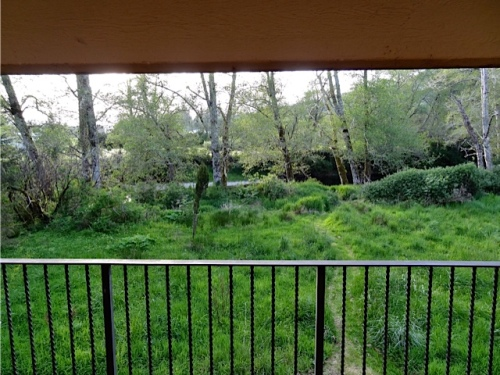 view of the river from the dining room