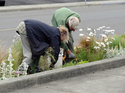 weeding (Allan's photo)