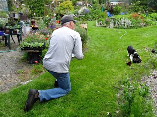 Then the back garden became much more interesting than Ed and a treat.