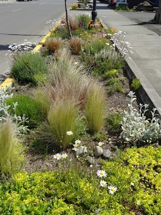 and another of our curbside gardens
