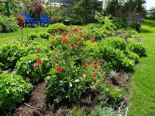 a bright red geum kind of throwing off the balance in the center bed