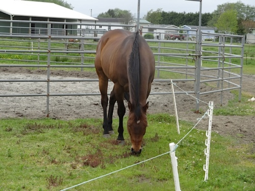 Our quiet rechargeable weedeater doesn't scare the horses.