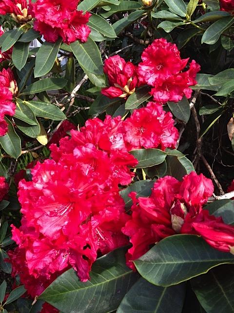 flower detail (Allan's photo)