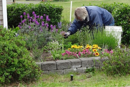 Allan planting at the kite museum entry garden