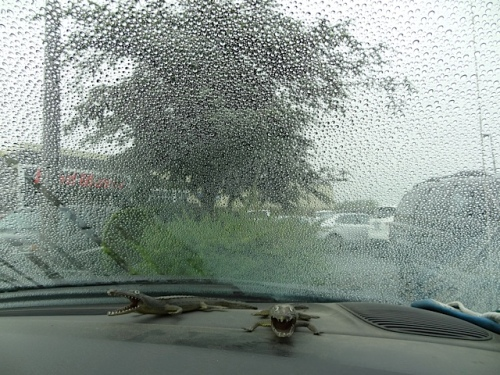 in one of the parking lots (Fred Meyer?), rain continues