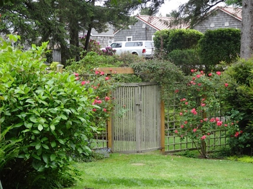 the lower level of the fenced garden, with Knockout roses