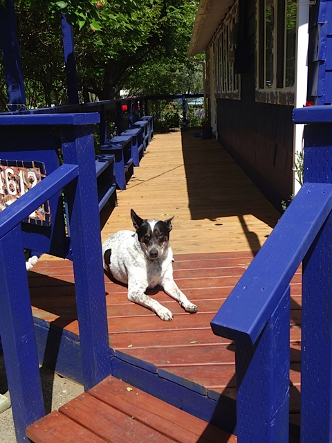 at the back porch again, with the lovely Lucy
