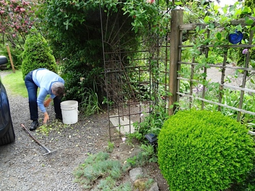 Mary was diligently weeding gravel outside the east gate.