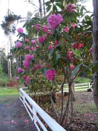 Maxine's garden (Allan's photo)