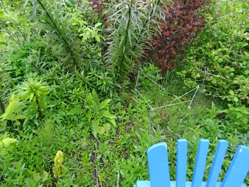 or this satisfyingly small area that still needs weeding in the east bed...