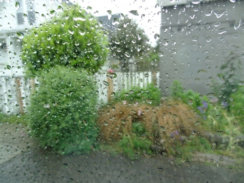 through the passenger window: Unpainted new boards bode ill for my sweet peas.