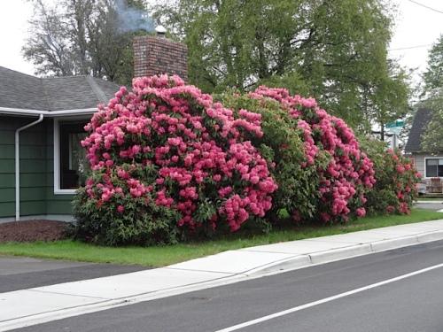 flowers and fireplace smoke