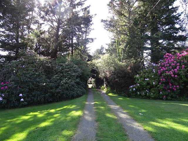 looking west: the road to Joanie's cottage