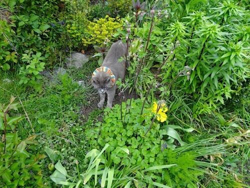 although Smokey likes is just as much weeded or not.