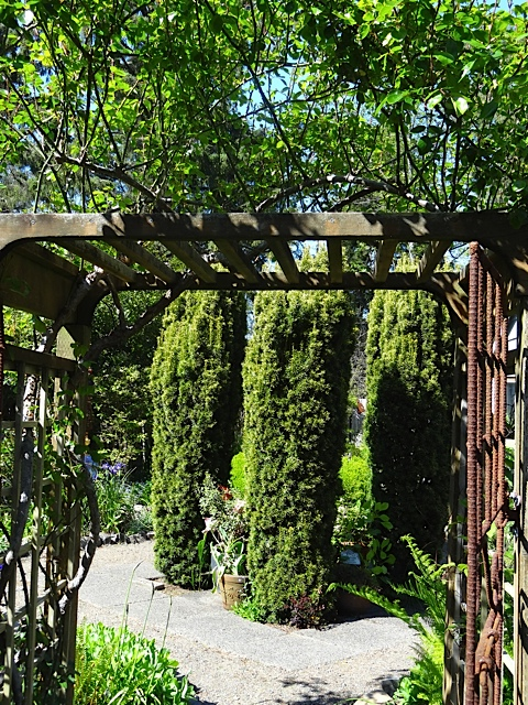 looking in the south gate; center of garden has four columnar golden yews