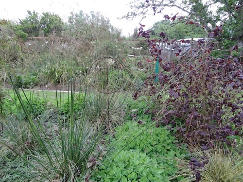 center bed with Stipa gigantea blooming