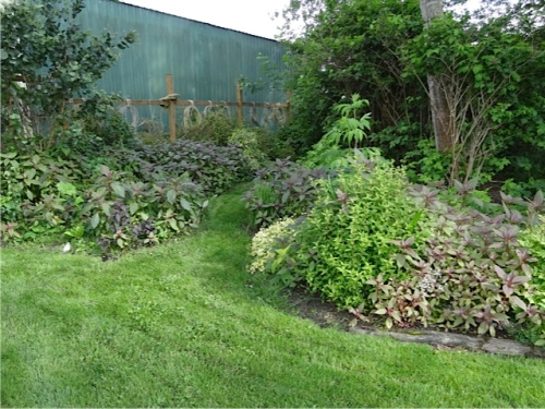 I decided to tackle the wild impatiens which had returned in this area.