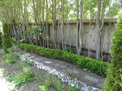 east edge of the garden with boxwood hedge