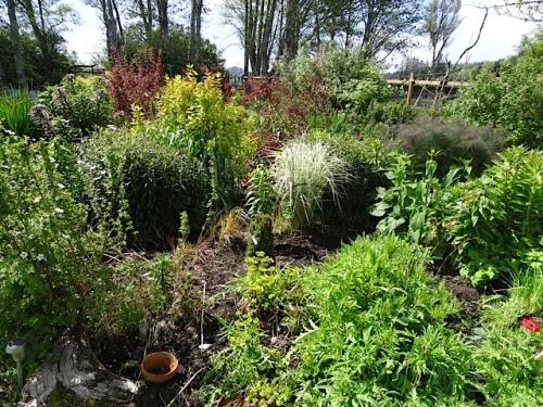 I admired my weekend weeding...