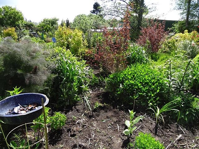 and more of my weekend weeding