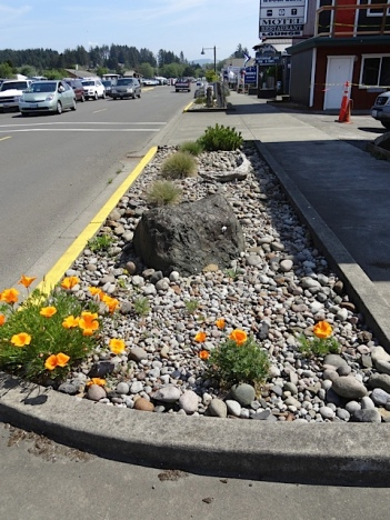 the xeriscape in front of the old Harbor Lights Motel (soon to reopen as the Salt Hotel)