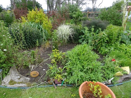 Back garden: The north end of the west bed had been my small weeding accomplishment yesterday.