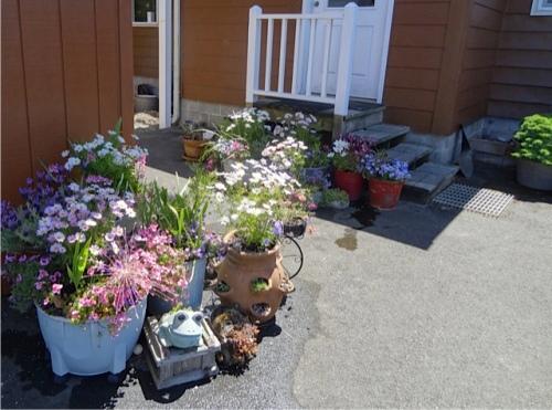 back garden planters
