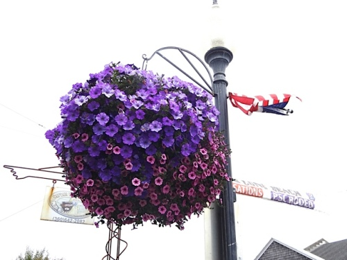 Who makes them (Nancy Aust), who waters them (city crew), how often (every day), where can I get one (The Basket Case on Sandridge) best planters we've ever seen (agreed), etc!
