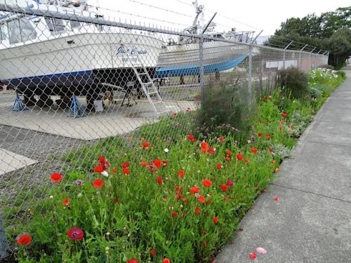 Ilwaco boatyard garden