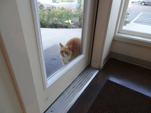 As we left, Parking Lot Cat was hoping to slither in and tour the dining room for pets.