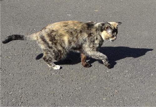 I met an old blind cat named Pit Stop.