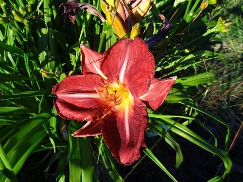 This daylily is a keeper.