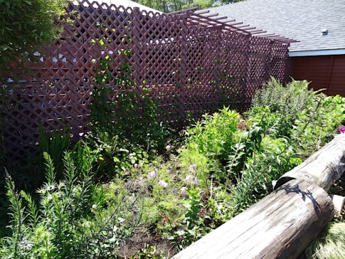 The garden remains mostly green, so far.