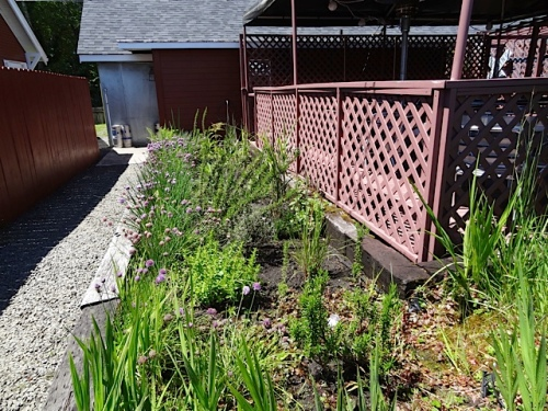 Grasses planted to enclose the dining deck.