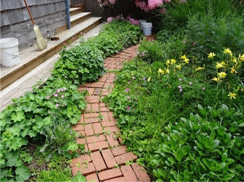 Allan's photo:  His further project, before, weeding along the southwest path.